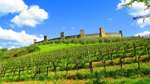 Vineyard in Monteriggiani,Italy